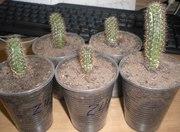 Продам комнатные растения в Запорожье