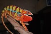 Большой выбор экзотических животных по смешным ценам!
