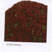 Продам черенки хризантемы высокого качества
