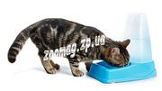 Посуда поилки  миски кормушки для собак и кошек Запорожье Украина недо