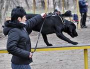 Дрессировка собак всех пород с гарантией качества работы.