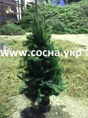Новогодняя елка (ветки ели,  вязанные) 50-65см